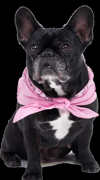 Lotte, der Hund aus der Werbekampagne für die Wölkchen GmbH auf transparentem Hintergrund.